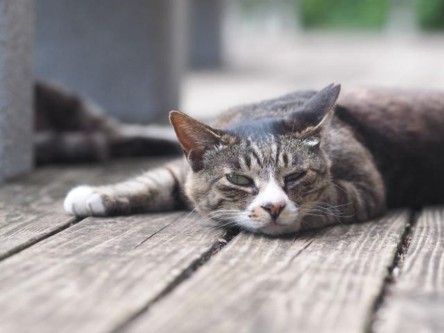 ぐうだらしている猫