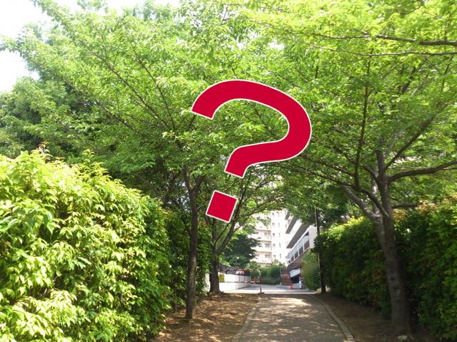 木に囲まれた小道にクエスチョンマーク