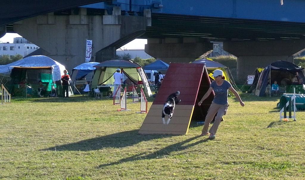 犬のアジリティー競技会