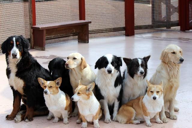 たくさんの犬