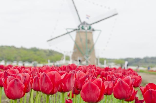 オランダで暮らしている女性からの手紙